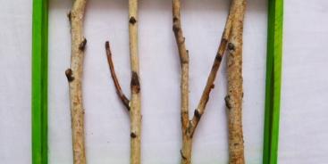 Что можно сделать из веточек дерева