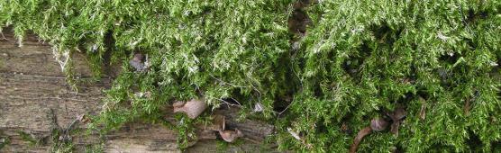 Как приклеить мох к изделию