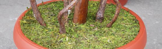 Как украсить горшок натуральным мхом